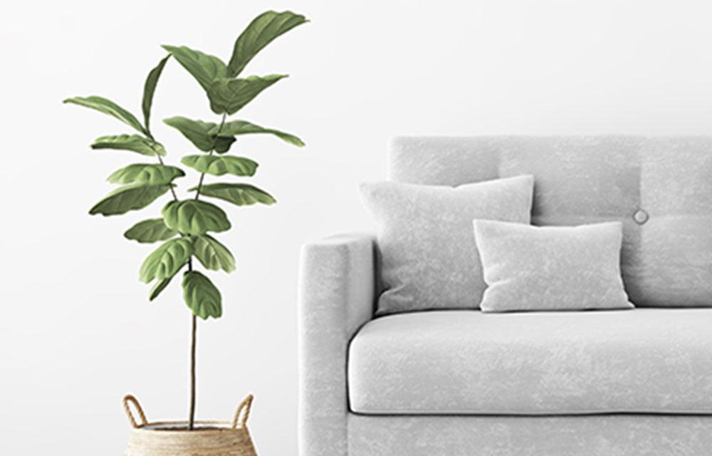 plant and grey sofa