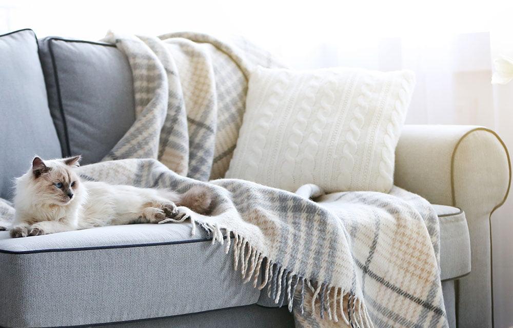 pet on sofa